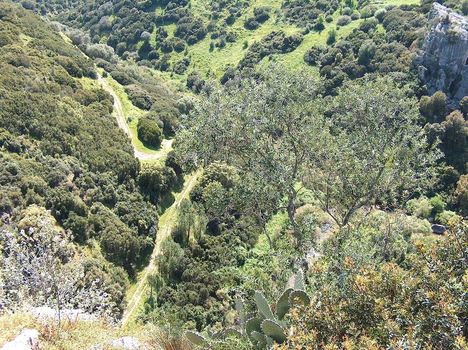 Na zdjęciu wiecznie zielone twardolistne zarośla makii śródziemnomorskiej.