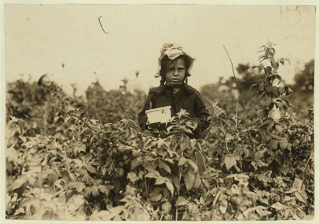 Annie (Ania) Bissie Annie (Ania) Bissie zrodziny polskich emigrantów na polu niedaleko Baltimore Źródło: Lewis Wickes Hine, Annie (Ania) Bissie, 1909, fotografia, Biblioteka Kongresu USA, domena publiczna.