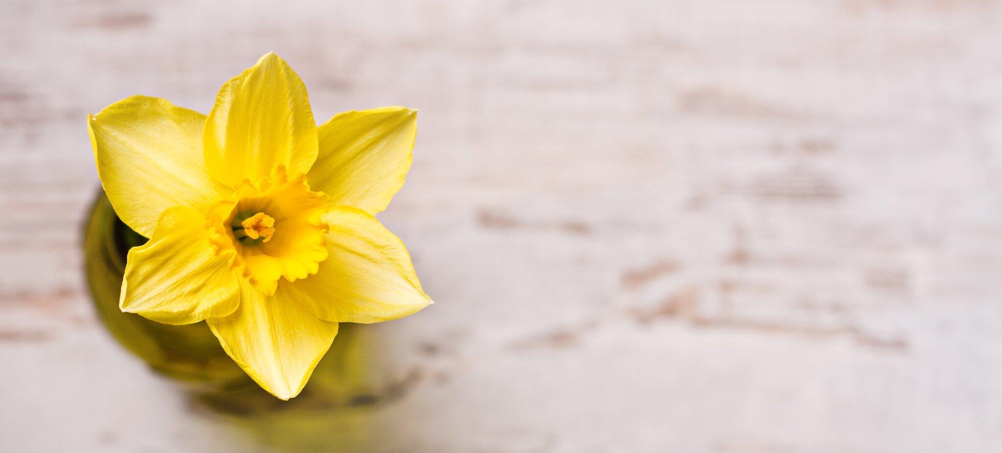 Kwiat Źródło: Joanna Jakubowicz, Kwiat, licencja: CC BY-SA 2.0.