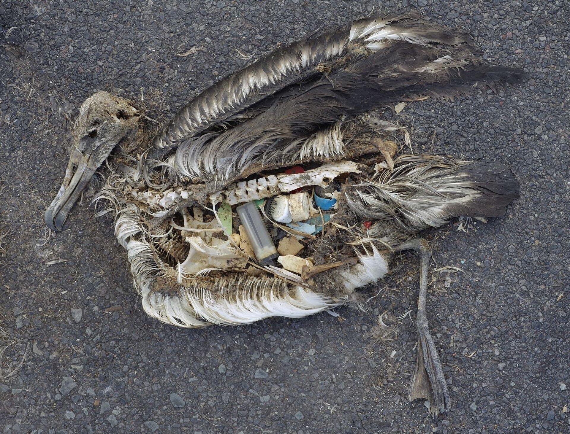 Na zdjęciu martwy albatros. Szkielet, resztki piór, wbrzuchu plastikowe śmieci: zakrętki buteleczki, kawałki plastiku.