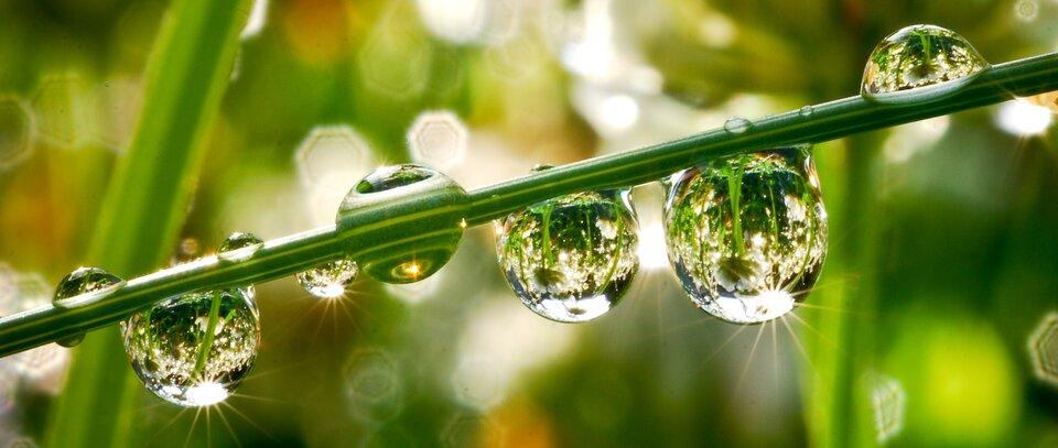 Zdjęcie przedstawia źdźbło trawy wdużym przybliżeniu. Tło zielone. Wtle rozmyte kontury innych źdźbeł. Na źdźble widać 5 dużych kropli oraz 6 małych kropelek rosy. Od kropli odbijają się promienie słoneczne.