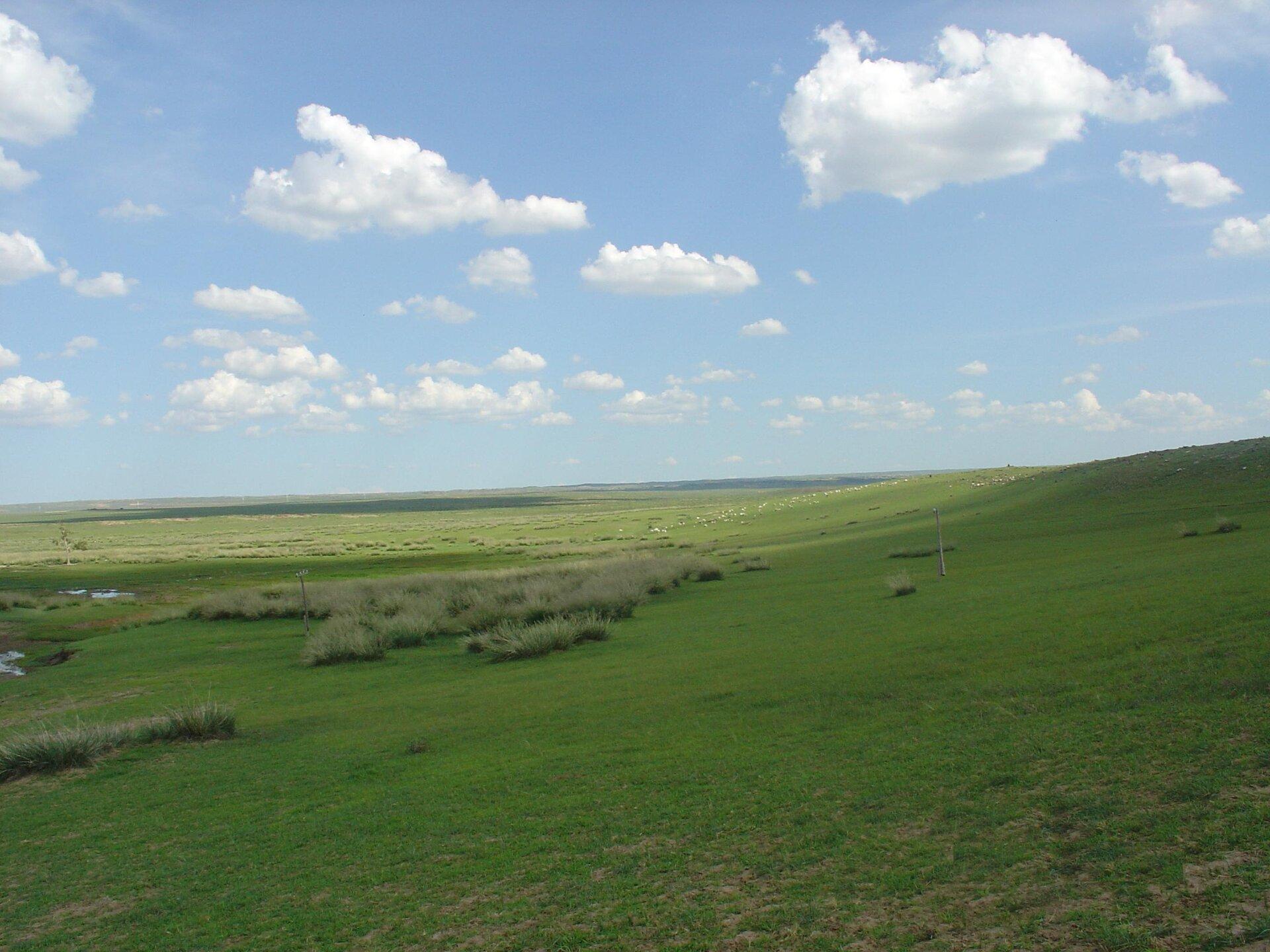 Rozległa równina porośnięta trawą. Gdzieniegdzie większe kępki suchych traw. Niebieskie niebo, białe chmury. Słonecznie.