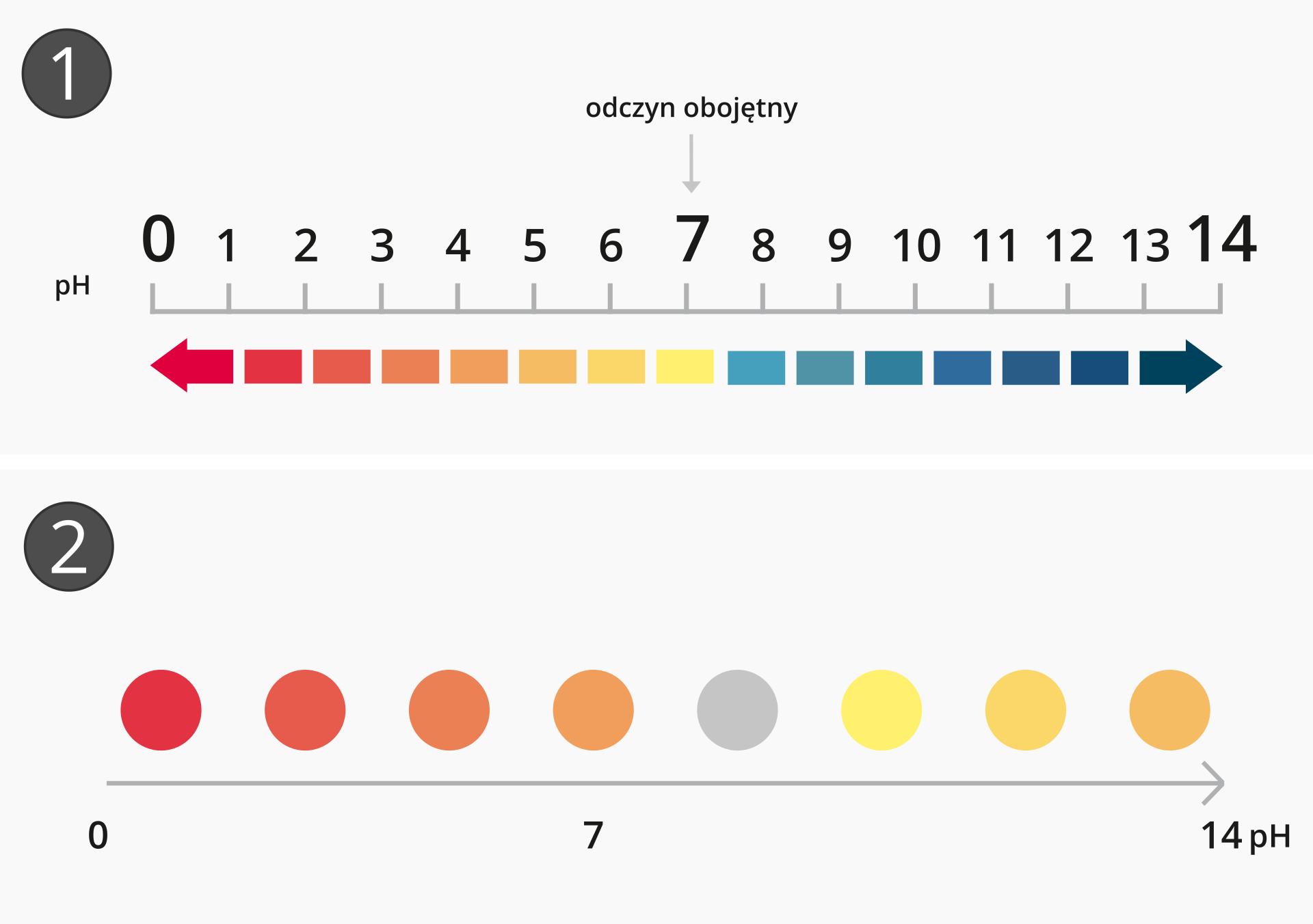 Ilustracja przedstawia skalę pH wraz zkolorystyką uniwersalnych papierków wskaźnikowych oraz wywaru zczerwonej kapusty wzależności od odczynu środowiska. Jest podzielona na dwie części, zktórych każda oznaczona jest liczbą wlewym górnym rogu. Górna część ilustracji, nosząca numer jeden przedstawia za pomocą ustawionej wpoziomie osi skalę kwasowości od zera do czternastu zpodziałem co jeden stopień. Środek skali, wartość 7 jest wyróżniona iopisana jako odczyn obojętny. Pod osią za pomocą barwnych prostokątów prezentowana jest zmiana kolorystyki uniwersalnego papierka wskaźnikowego wzależności od odczynu. Wzakresie od zera do trzech jest to barwa czerwona, która wzakresie od trzech do pięciu przechodzi stopniowo wpomarańczową, anastępnie wżółtą, charakterystyczną dla odczynu obojętnego. Środowisko zasadowe rozpoczyna się barwami morskimi, które wokolicach jedenastu przechodzą wkolor intensywnie niebieski, anastępnie stopniowo wgranatowy. Dolna część ilustracji, nosząca numer dwa przedstawia skalę dla wywaru zczerwonej kapusty. Skala ma postać poziomej strzałki, której lewy koniec oznaczony jest jako zero, aprawy jako czternaście pH. Nad strzałką prezentowane są barwne koła okolorystyce typowej dla danego odczynu. Nie jest to klasyfikacja ścisła, ponieważ wywar zczerwonej kapusty nie jest sklasyfikowany jako precyzyjny wskaźnik. Przejścia kolorów pokrywają się zinformacjami zawartymi wgalerii na początku tej strony: odczynowi kwasowemu odpowiadają barwy ciepłe od czerwieni po głęboką purpurę, odczyn obojętny, czyli siedem pH to fiolet, natomiast odczyn zasadowy wzależności od stopnia zasadowości wyróżniają barwy niebieska, morska, zielona iżółta.