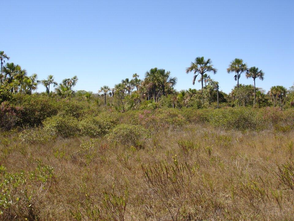 Na zdjęciu kępy wysuszonych traw, krzewy ipojedyncze drzewa.