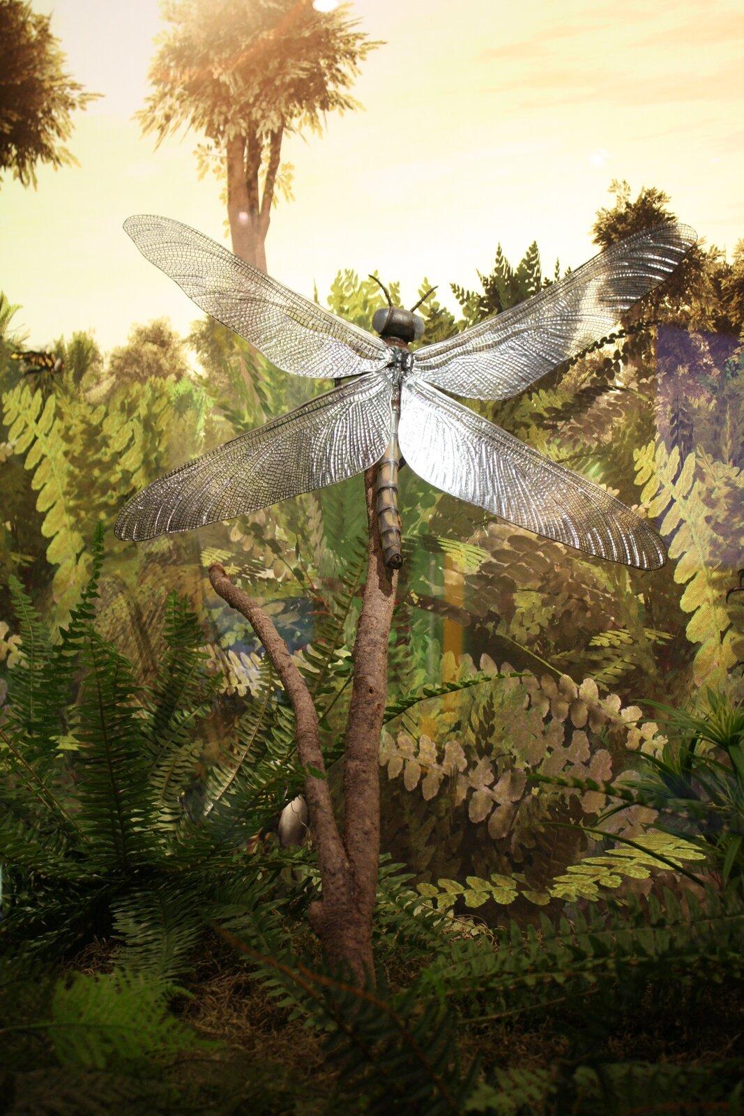 Ilustracja przedstawia olbrzymią ważkę Meganeura na tle drzewiastych paproci. Siedzi pionowo na pniu, czarna głowa ugóry. Dwie pary błoniastych skrzydeł rozpostarte na boki.