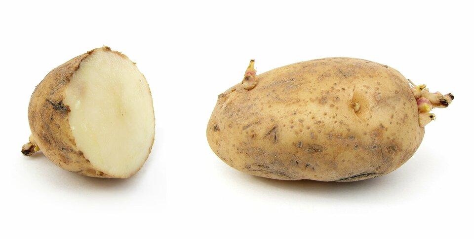 Fotografia przedstawia dwie podziemne bulwy spichrzowe ziemniaka. Jedna jest przecięta.