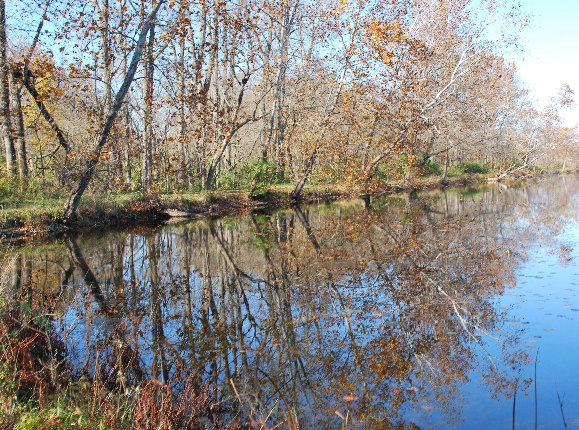 Zdjęcie drzew rosnących wzdłuż brzegu rzeki iodbicie tych drzew wwodzie.