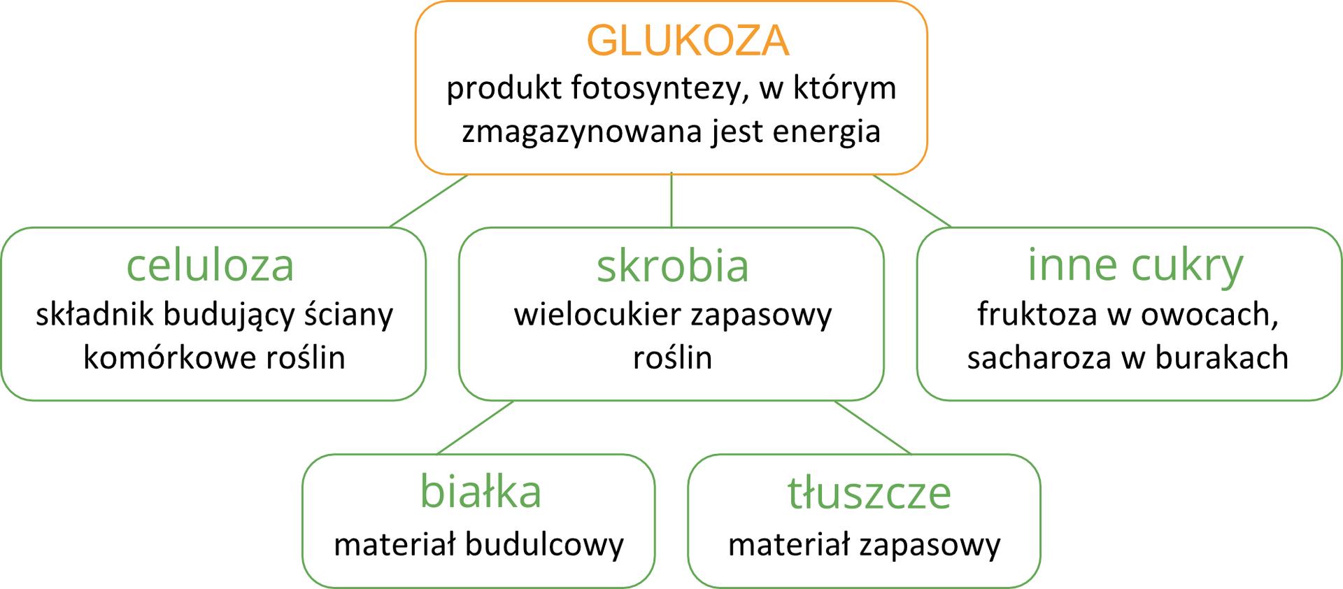 Ilustracja przedstawia schemat przemiany glukozy wzwiązki organiczne wpostaci prostokątów. Duży pomarańczowy prostokąt oznacza glukozę, czyli produkt fotosyntezy. Od niego linie wdół prowadzą do trzech zielonych prostokątów. Oznaczają one związki, powstające zglukozy: celulozę, skrobię iinne cukry. Od prostokąta znazwą skrobi wdół prowadzą dwie linie do kolejnych zielonych prostokątów. Oznacza to, że ze skrobi powstają białka itłuszcze.