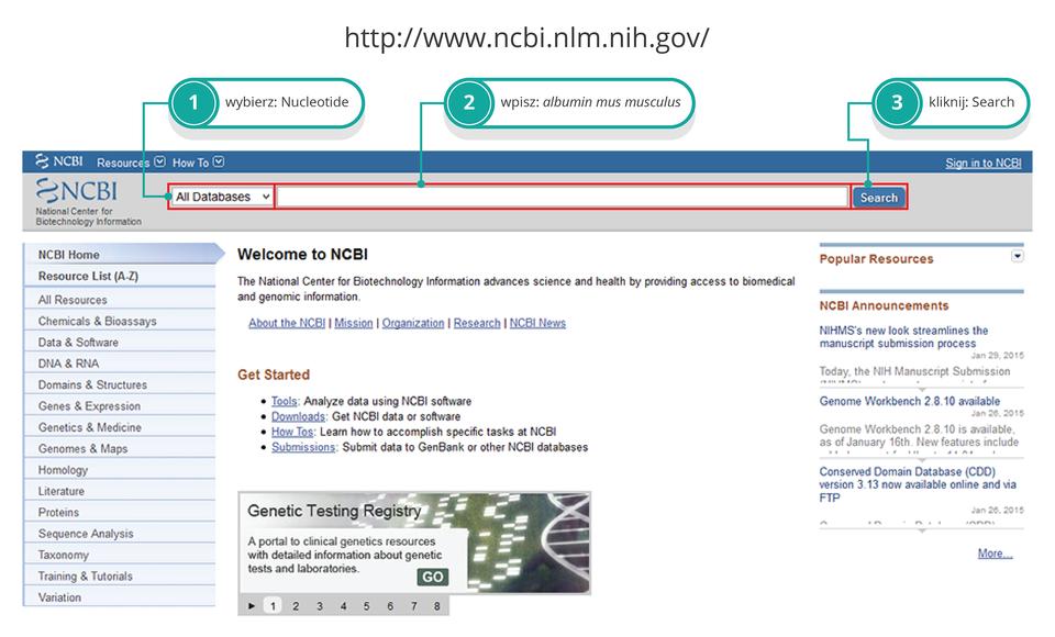 Ilustracja przedstawia stronę główną serwera NCBI wjęzyku angielskim. Kolorem morskim icyframi od 1 do 3 oznaczono kolejne kroki instrukcji zpolecenia: wybór albuminy myszy.