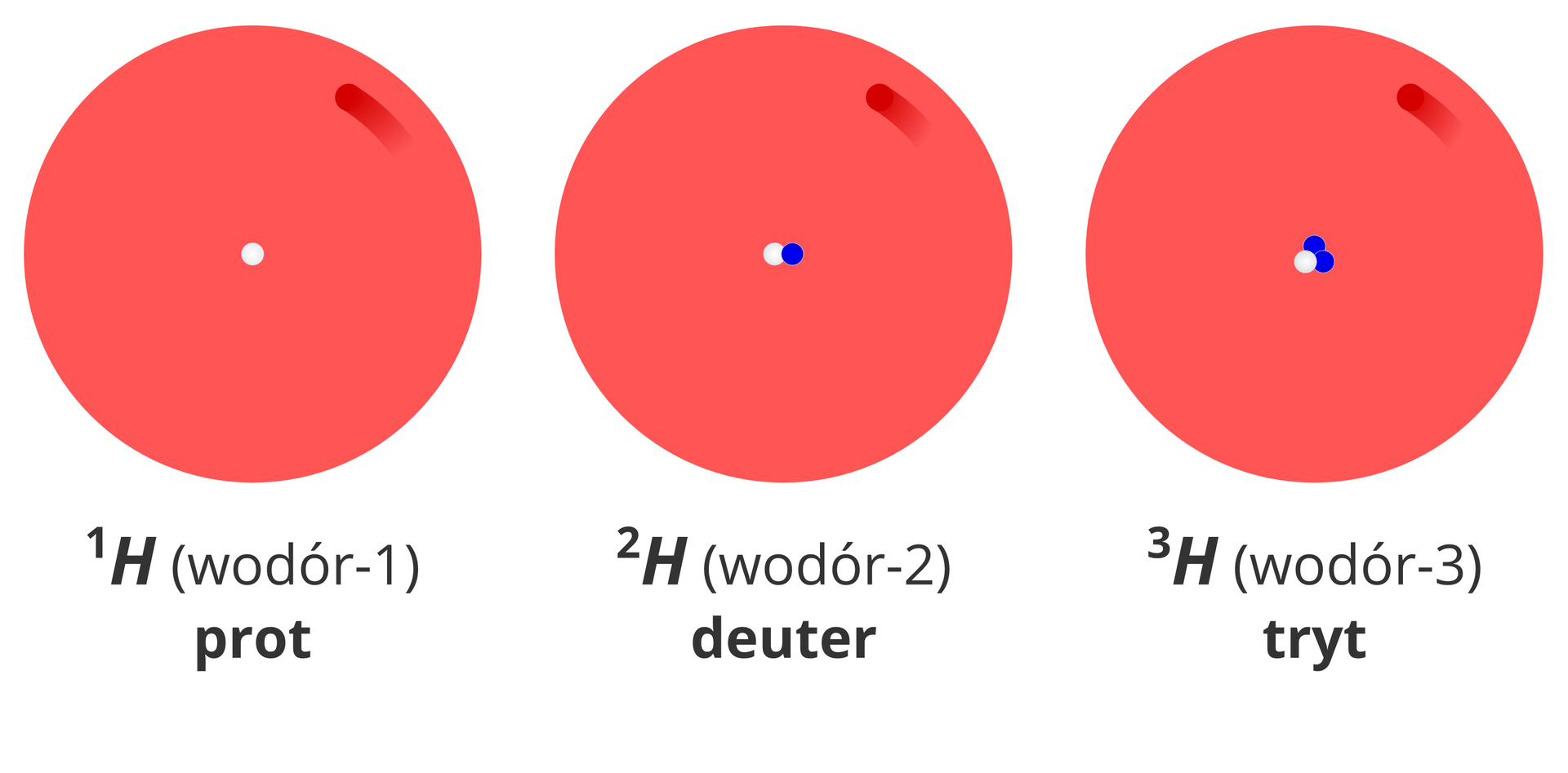 Ilustracja przedstawia uproszczone modele budowy trzech izotopów wodoru: protu, deuteru itrytu. Przedstawiające je rysunki mają postać dużych czerwonych kół symbolizujących powłokę elektronową zjedną rozmytą ciemniejszą plamą oznaczającą elektron. Wsamym środku tych kół znajdują się jądra atomów. Pierwszy od lewej zprezentowanych atomów to wodór-1, czyli prot. Wjądrze jego modelu znajduje się białe koło symbolizujące proton. Drugi, środkowy zprezentowanych atomów to wodór-2, czyli deuter. Wjądrze jego modelu znajduje się białe koło symbolizujące proton oraz niebieskie koło symbolizujące neutron. Trzeci zprezentowanych atomów znajdujący się po prawej stronie ilustracji to wodór-3, zwany też trytem. Wjądrze jego modelu znajduje się białe koło symbolizujące proton oraz dwa niebieskie koła symbolizujące neutrony.