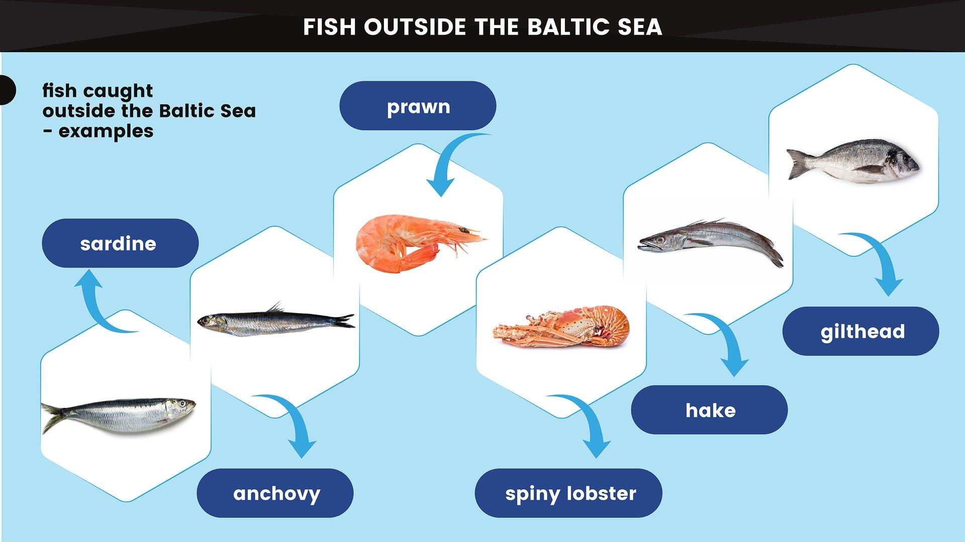 The image presents the basic examples of animals caught outside the Baltic Sea. Grafika przedstawia podstawowe przykłady zwierząt poławianych poza Morzem Bałtyckim.