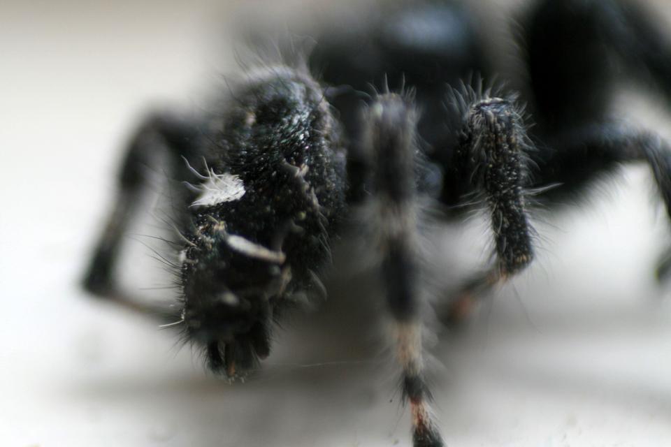 Włókna syntetyczne otrzymuje się je przez wyciąganie nici zciekłego polimeru poprzez przepuszczanie go przez małe otwory, które są fabrycznym odpowiednikiem przędnego gruczołu pająka