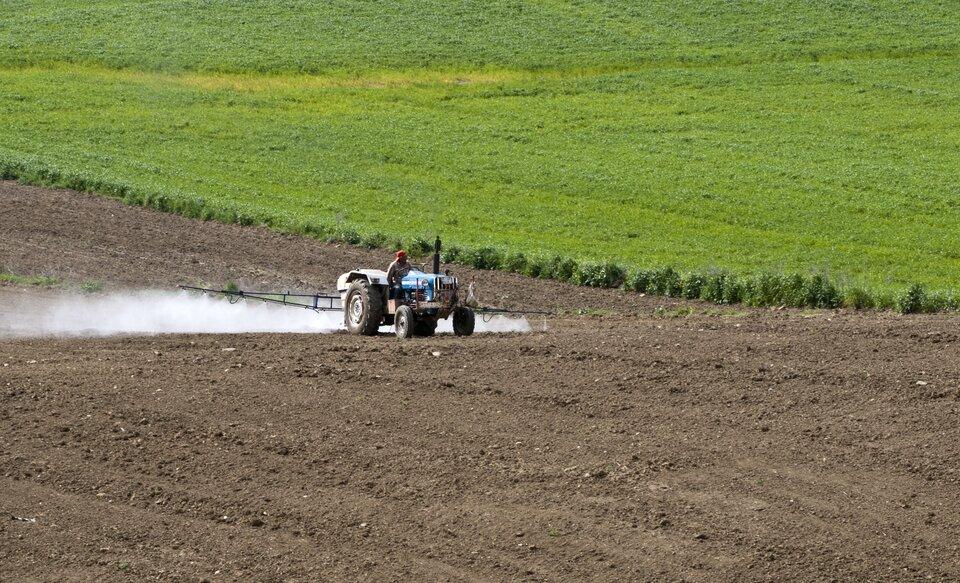 Zwalczanie stonki ziemniaczanej