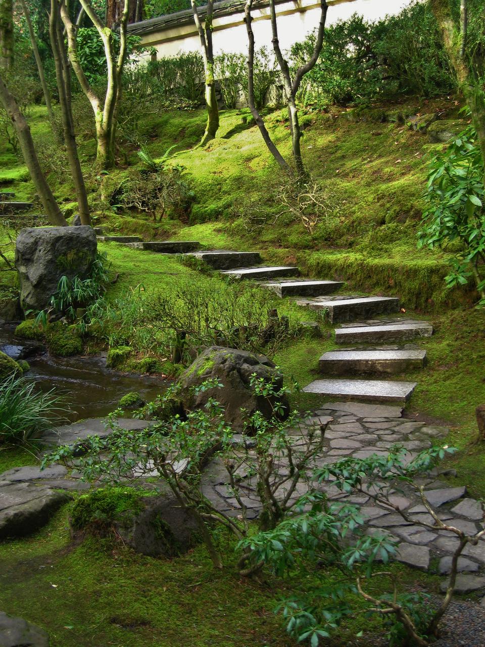 Fotografia przedstawia wnętrze japońskiego ogrodu. Ugóry ogród zamknięty jest białym murem. Pod nim rośnie kilka drzew ocienkich pniach. Kamienne płyty stają się schodami iwiodą wgłąb ogrodu, między drzewa. Przy płytach ipod drzewami rośnie żółtozielony dywan zmchów. Zlewej strony fotografii znajdują się kawałki skał izbiornik wody. Na pierwszym planie niewielki rododendron.