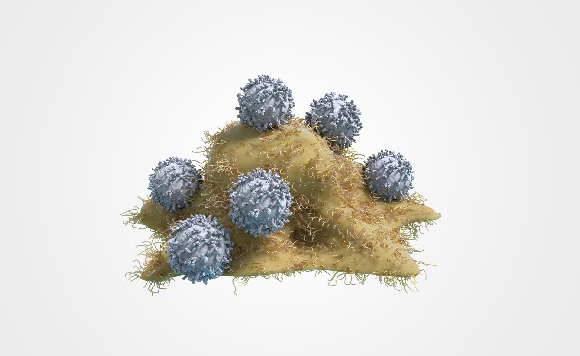 Ilustracja przedstawia atak niebieskich, kulistych limfocytów na rozpłaszczoną, beżową, owłosioną komórkę nowotworową.