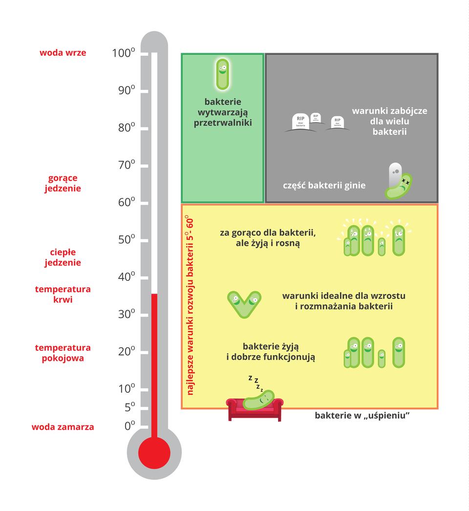 Ilustracja przedstawia zlewej strony szary termometr zpodziałka od zera do stu stopni Celsjusza. Zboku na czerwono opisano zjawiska, zachodzące wdanej temperaturze. Czerwony kolor wtermometrze wskazuje temperaturę około trzydziestu sześciu stopni, czyli temperaturę ludzkiej krwi. Po prawej znajdują się trzy prostokąty. Dwa górne obejmują zakres temperatury od 60 do 100 stopni. Niebieski prostokąt zrysunkiem jednej bakterii oznacza, że niektóre bakterie wtej temperaturze wytwarzają przetrwalniki. Obok wszarym prostokącie ukazano trzy jaśniejsze nagrobki. Temperatura powyżej 80 stopni jest zabójcza dla wielu bakterii. Przy temperaturze powyżej 60 stopni (na przykład gorące jedzenie) jest rysunek padającej bakterii, co oznacza, że część bakterii ginie. Duży pomarańczowy prostokąt obejmuje temperaturę od 5 do 60 stopni. Temperatura około 55 stopni (ciepłe jedzenie) sprawia, że bakteriom na rysunku jest za gorąco, ale mimo to żyją irosną. Wtemperaturze około 36 stopni bakterie dobrze rosną irozmnażają się. Wniższej temperaturze bakterie nadal mogą żyć idobrze funkcjonować. Wtemperaturze pięciu stopni bakterie przechodzą wstan uśpienia; na rysunku bakteria chrapie na kanapie.