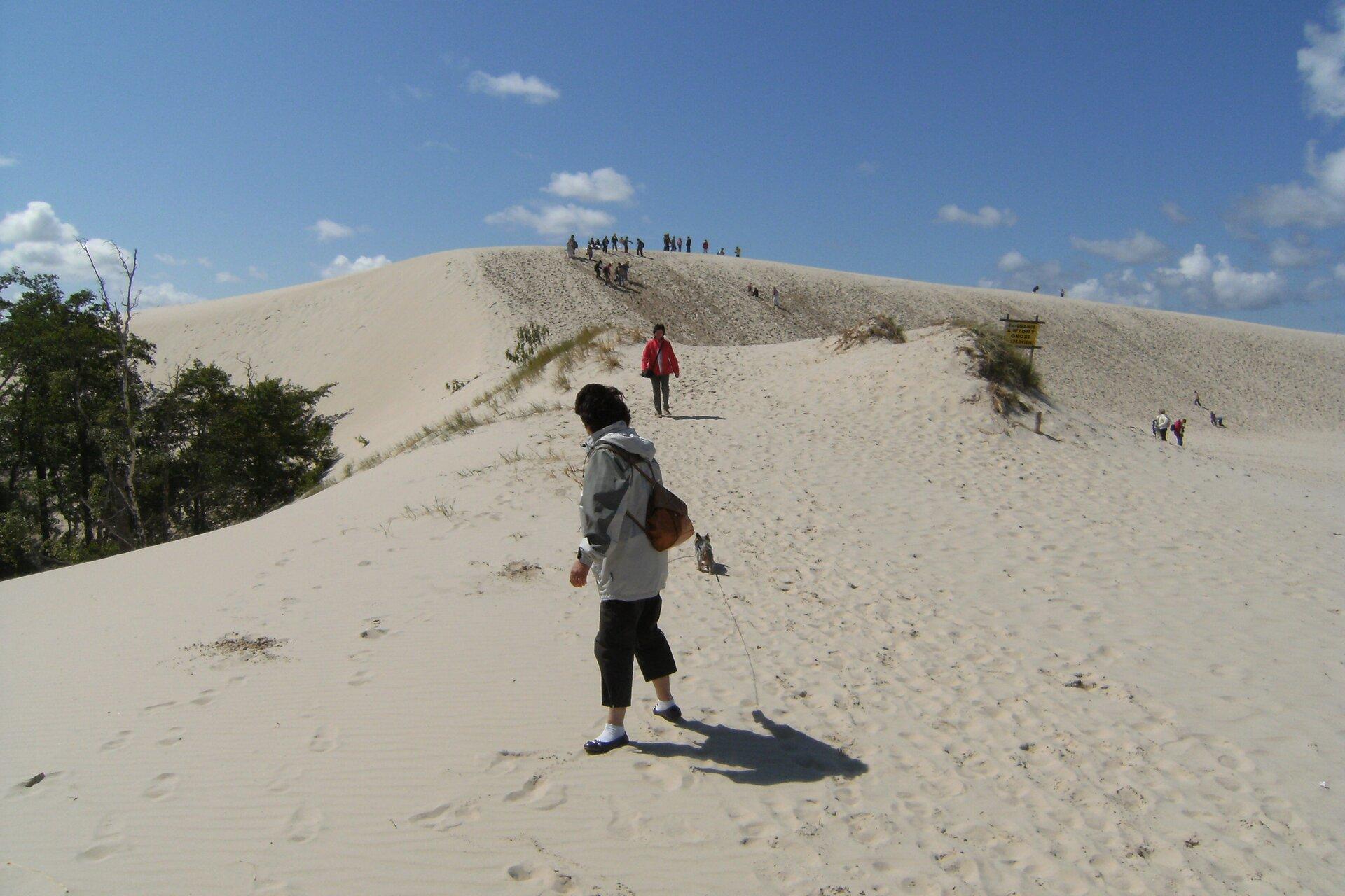 Na zdjęciu rozległa wydma porośnięta skąpą roślinnością, na szczycie grupa ludzi, zlewej strony wdole kilka drzew, pnie zasypane piaskiem.
