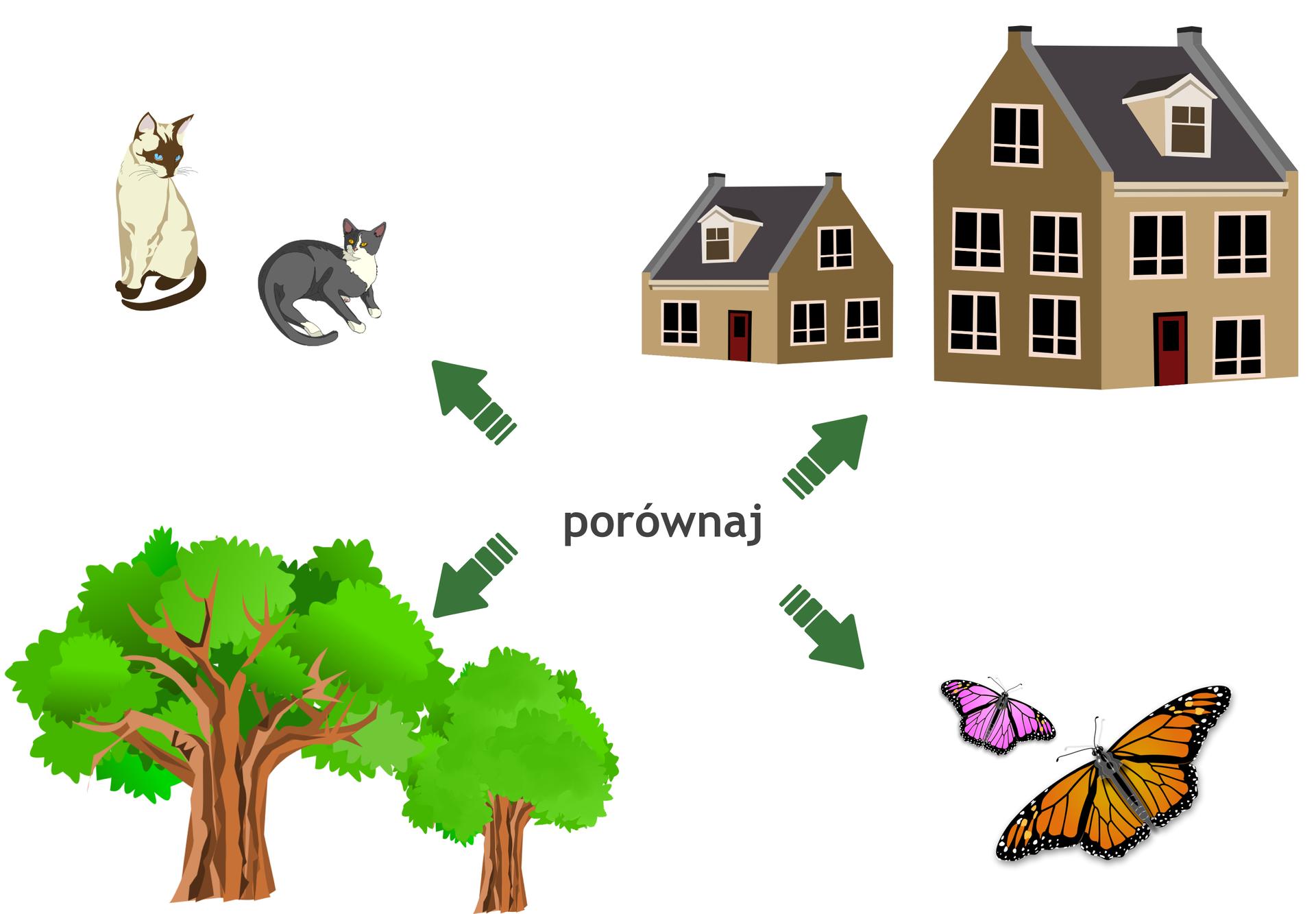 Rysunek dwóch kotów, dwóch motyli, dwóch drzew idwóch budynków. Obiekty są różnych rozmiarów.