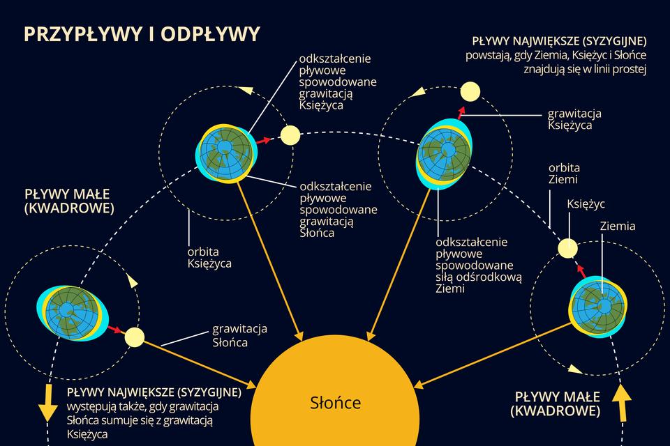 Ilustracja przedstawia żółte Słońce na czarnym tle. Dookoła Słońca na orbicie Ziemi umieszczono cztery modele Ziemi wróżnych położeniach. Dookoła każdego modelu Ziemi krąży po orbicie Księżyc. Jest wróżnych położeniach. Każdy model Ziemi ma niebieskawą otoczkę różnej grubości. To woda. Otoczka jest grubsza gdy jest przypływ. Następuje to wówczas gdy Ziemia, Księżyc iSłońce znajdują się wjednej linii.