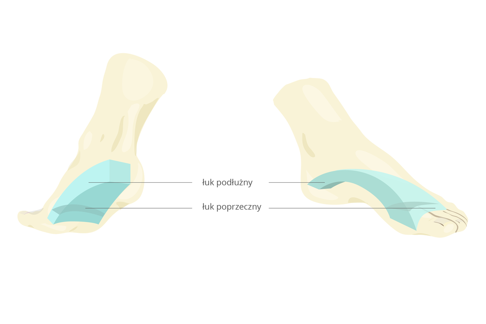 Schemat przedstawiający łuki stopy: podłużny po wewnętrznej stronie, podłużny po zewnętrznej stronie stopy, poprzeczny pod podstawą palców śródstopia.