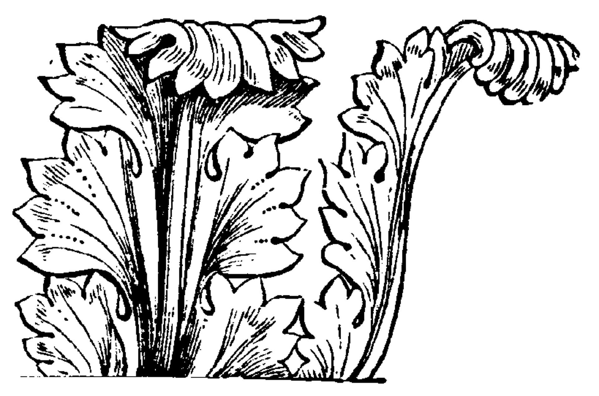 Ilustracja przedstawiająca ornament: akant. Element dekoracyjny naszkicowany jest czarnym kolorem bez wypełenień. Ornament kształtem przypomina liść akantu.