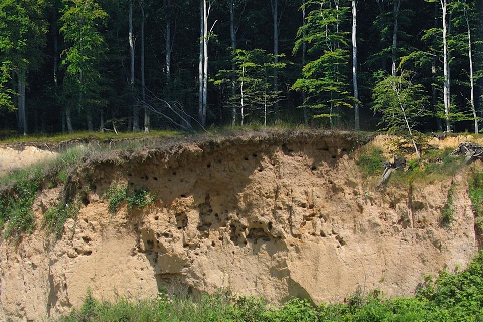 Na zdjęciu odsłonięte warstwy żółtej pylastej skały porośnięte lasem.