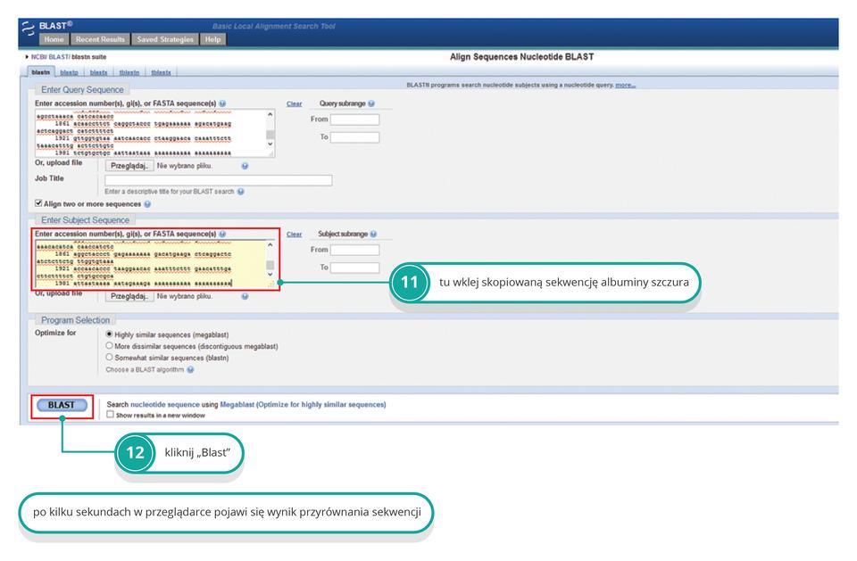 PoróIlustracja przedstawia zrzut ekranu serwera NCBI ikolejne kroki postępowania.