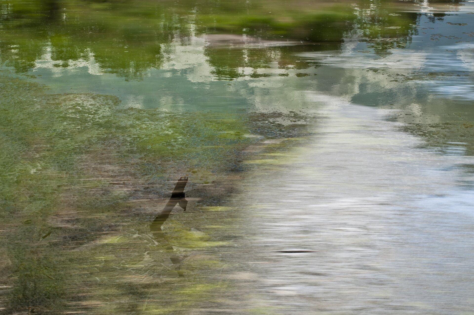 """Ilustracja przedstawia fotografię artystyczną """"Szpręgi I"""" autorstwa Anny Kola. Dzieło ukazuje taflę wody zodbijającymi się wniej konarami zielonych drzew iniebem. Wcentrum kadru znajduje się rozmyty konar wystający zwody. Pierwszy plan zdjęcia jest rozmazany, jakby wruchu – co nadaje dynamiki statycznej kompozycji. Na fotografii dominują zielenie ibłękity."""