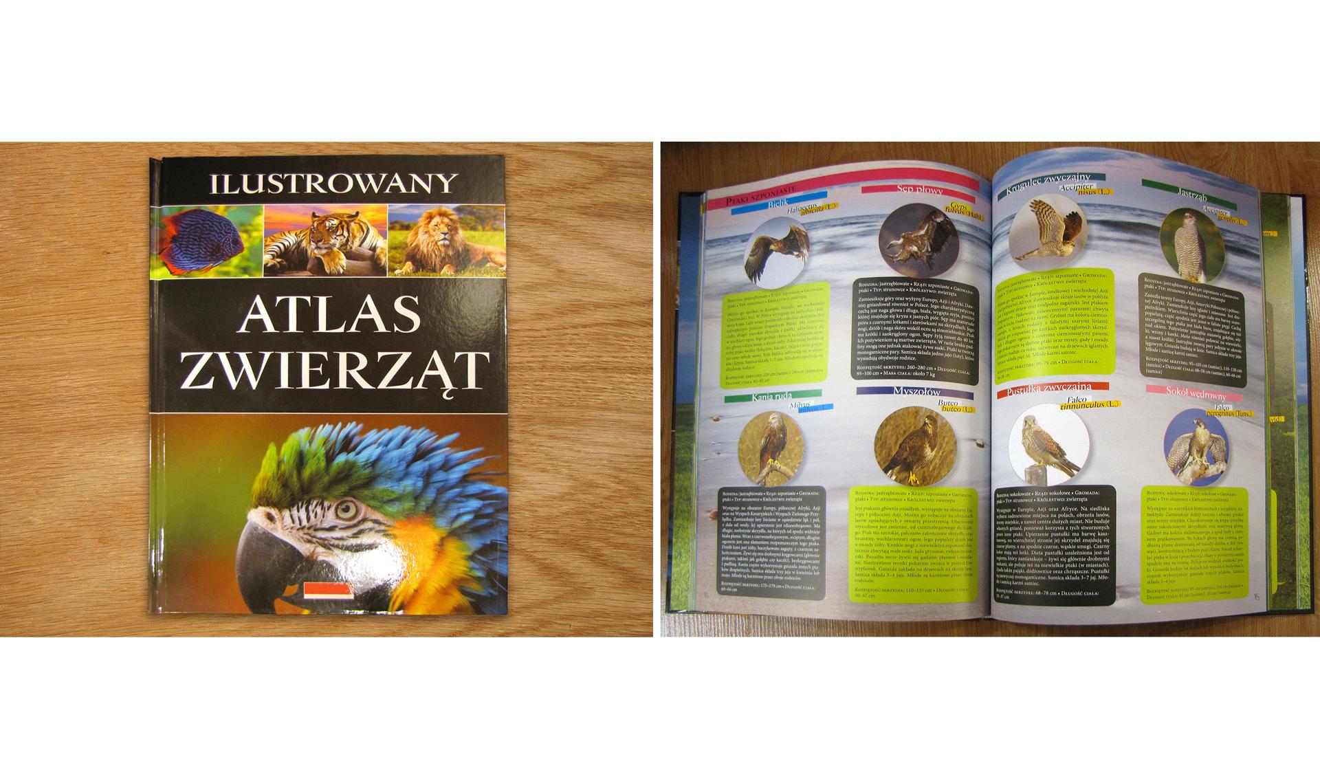 """Dwie fotografie przedstawiające atlas zwierząt. Na pierwszej fotografii książka jest zamknięta. Na okładce widnieje tytuł książki """"Ilustrowany atlas zwierząt"""". Na dole okładki zamieszczono zdjęcie głowy kolorowej papugi, ana górze okładki trzy zdjęcia przedstawiające kolejno: niebiesko-czerwoną rybę, tygrysa ilwa. Na drugiej fotografii zaprezentowano wnętrze atlasu. Na kartach książki umieszczono zdjęcia różnych zwierząt oraz opis ich zachowania, sposobu życia, miejsca występowania iinnych cech dla nich charakterystycznych."""