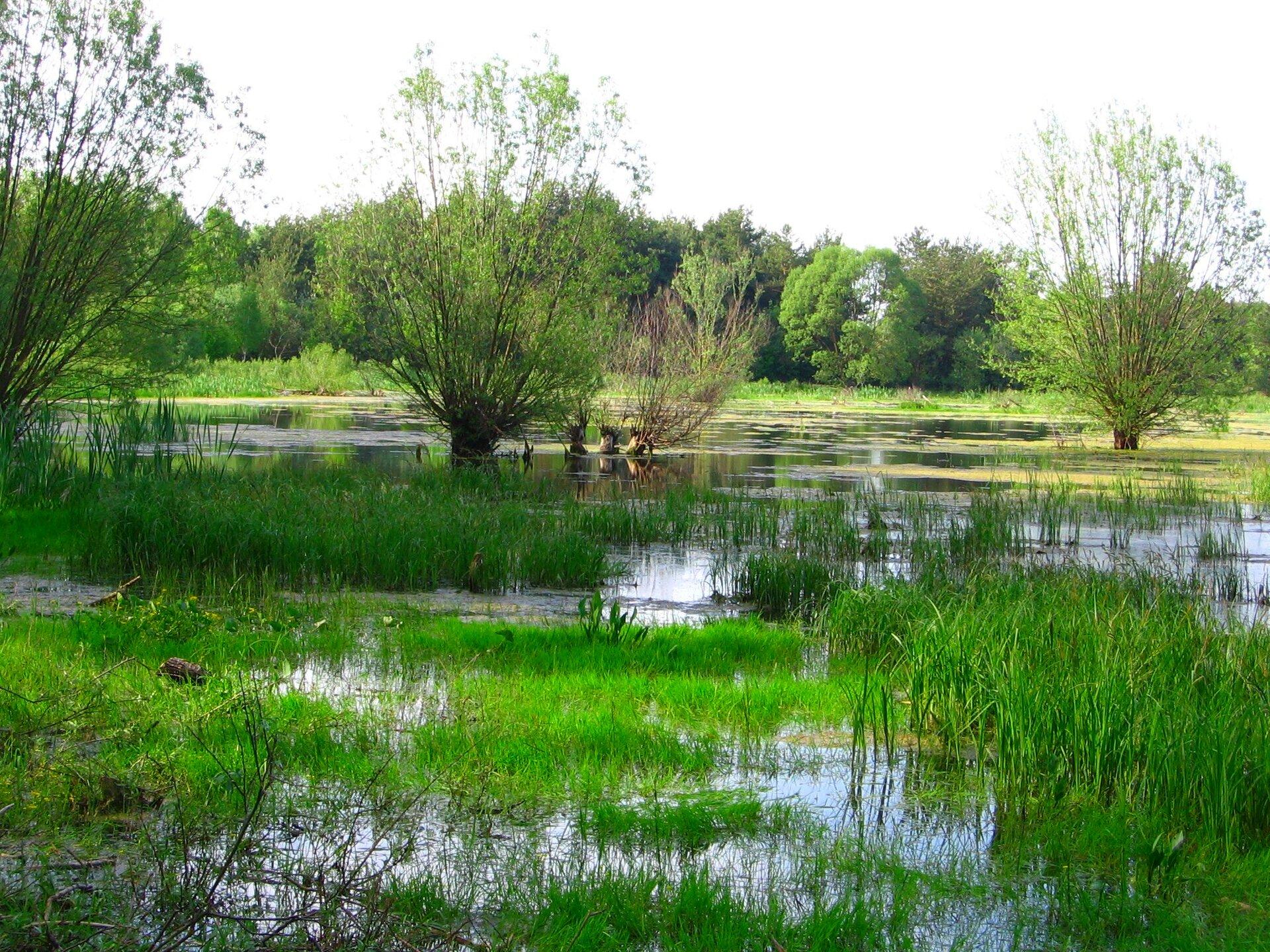 Na zdjęciu płaska równina leżąca wdorzeczu rzeki. Rozlewisko. Drzewa rosną wwodzie.