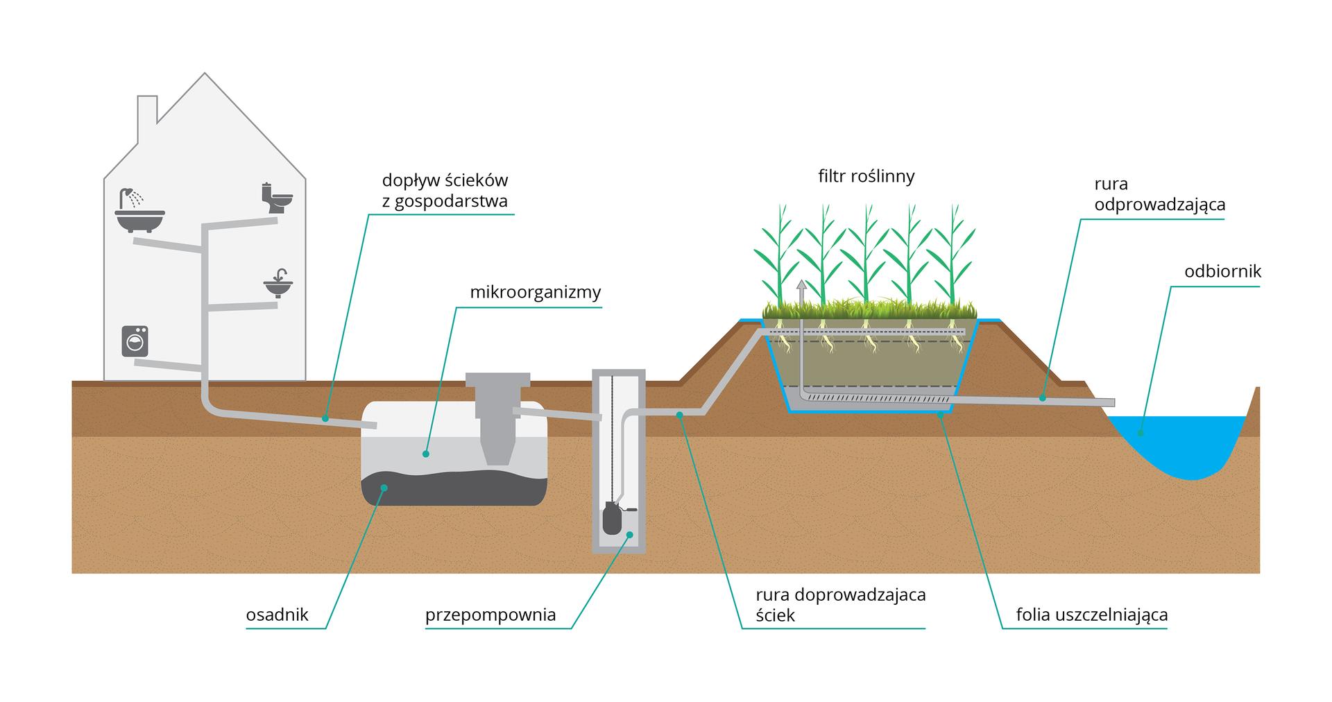 Ilustracja przedstawia sposób oczyszczania ścieków przy użyciu roślin. Kolor brązowy oznacza glebę, niebieski wodę. Zlewej przekrój przez budynek zuwzględnieniem urządzeń sanitarnych. Szara rurka wprawo prowadzi do zbiornika, wktórym działają mikroorganizmy. Ma on na dnie ciemny osad. Dalej ścieki poprzez pionowy prostokąt, czyli przepompownię trafiają na podwyższenie, wktórym rosną różne zielone rośliny. Stąd oczyszczona woda jest odprowadzana do zbiornika.