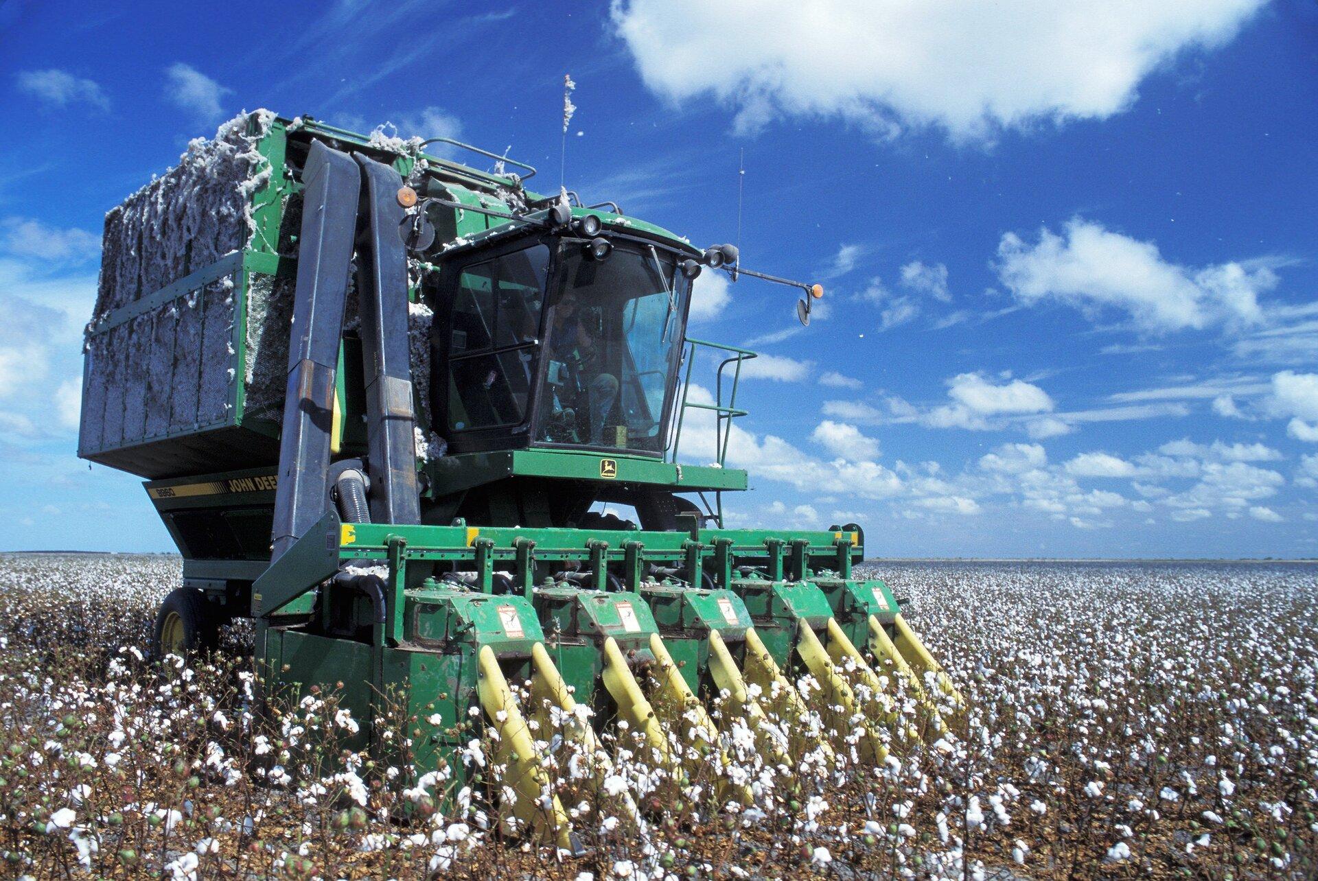 Na ilustracji maszyna do zbioru bawełny. Zprzodku dziesięć ramion do usuwania włókna, ztyłu duży pojemnik na zebrane włókno. Maszyna jedzie po polu bawełny. Plantacja bawełny wypełnia całe zdjęcie.