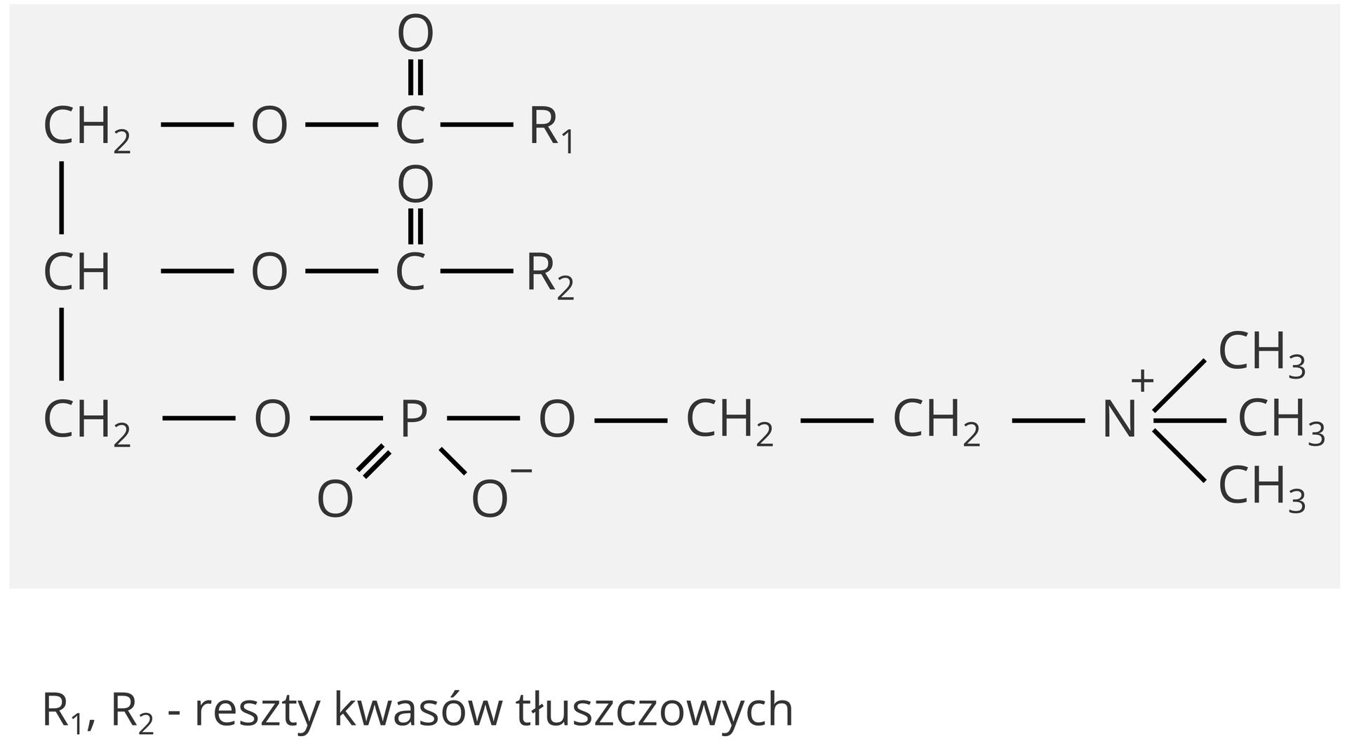 Lecytyny –budowa chemiczna