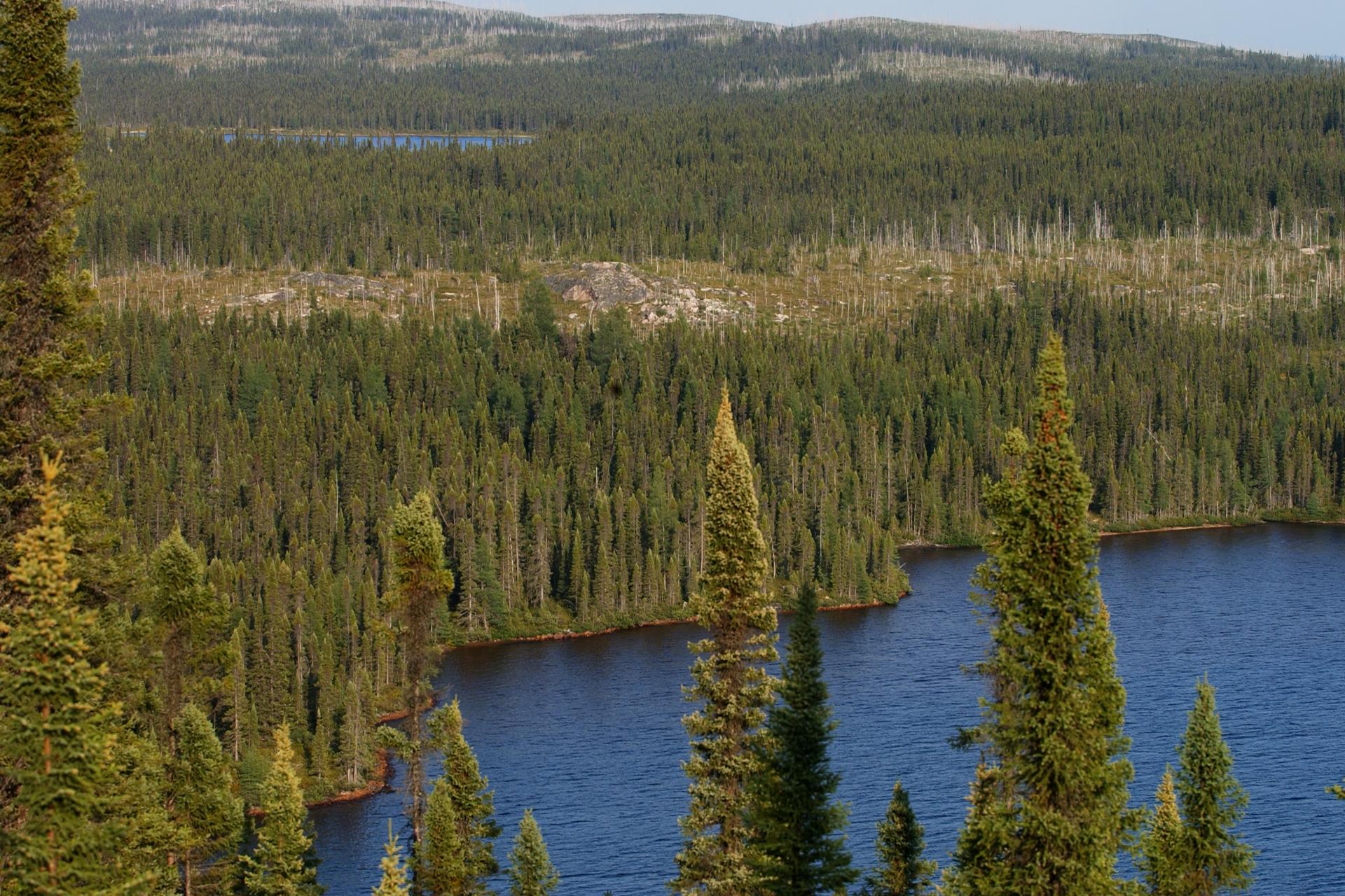 Fotografia przedstawia łagodnie pofalowany krajobraz kanadyjskiej tajgi wujęciu zgóry. Po prawej iwgłębi znajduje się jezioro. Gdzieniegdzie wystają skały. Na prawie całym terenie gęsto rosną drzewa iglaste.