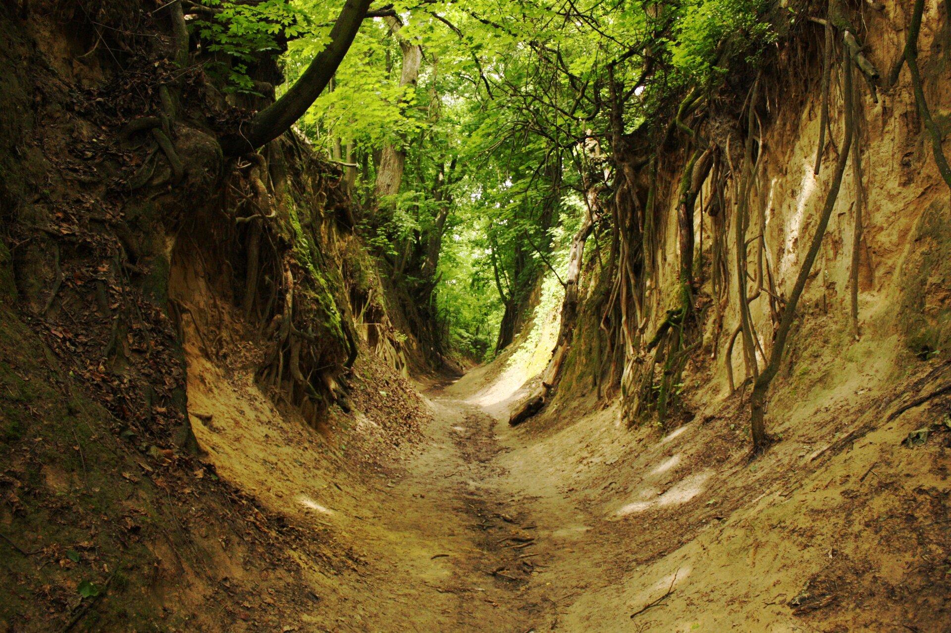 Zdjęcie wklęsłej formy terenu obardzo stromych iwąskich stokach, jest to wąwóz. Na brzegach wąwozu widoczne są odkryte korzenie drzew, które rosną na górze wąwozu.