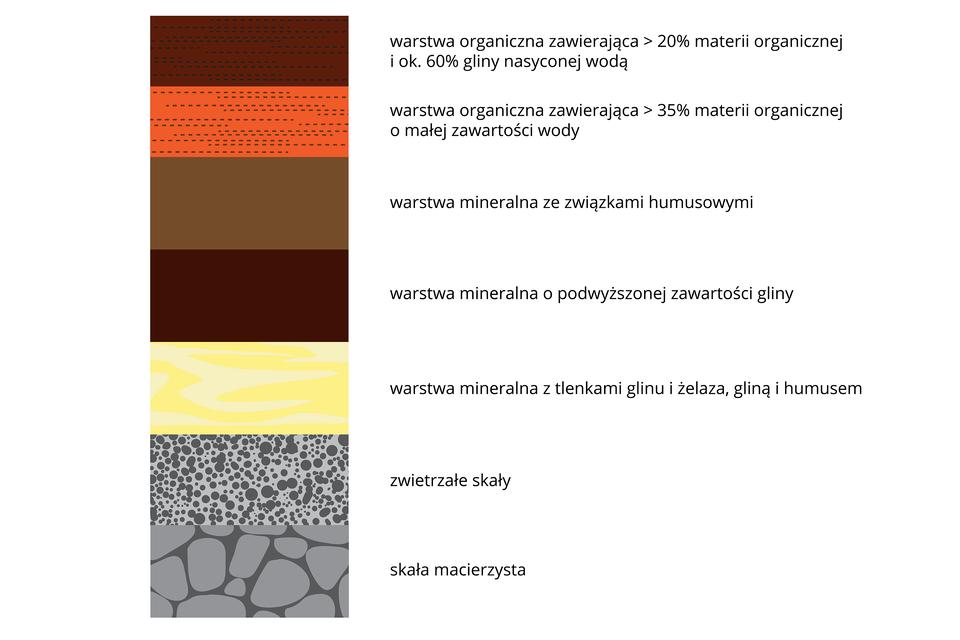 Zdjęcie 1: Warstwy profilu gleby; Zdjęcie 2: Profil gleby rdzwo-brunatnej; Zdjęcie 3: Profil gleby płowej właściwej.