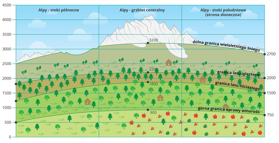 Na ilustracji piętra roślinne igranica wieloletniego śniegu wAlpach. Zróżnicowanie wysokości pięter roślinnych wzależności od ekspozycji stoku. Na stokach północnych wszystkie piętra roślinne zaczynają się na niższych wysokościach niż na grzbiecie centralnym istokach południowych. Granica wiecznego śniegu najniżej. Brak tam również upraw winorośli.