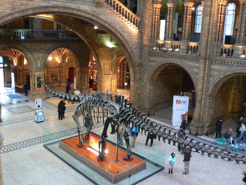 Fotografia przedstawia wnętrze muzeum przyrodniczego, na pierwszym planie szkielet dinozaura.