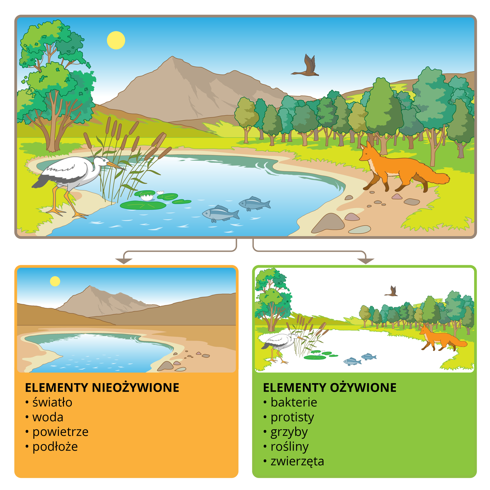 Ilustracja złozona z3 częśći. Górna przedstawia krajobraz wraz zekosystemem. Dolna po lewej tylko biotop: światło, woda, powietrze podłoże. Kolejna tylko biocenozę: bakterie, protisty, grzyby, rośliny, zwierzęta.