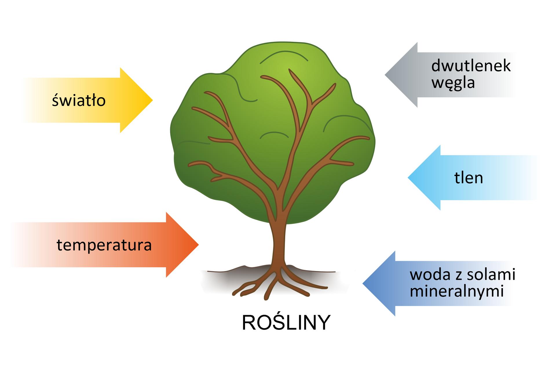 Ilustracja przedstawiająca potrzeby życiowe roślin: światło, dwutlenek węgla, tlen, woda zsolami mineralnymi itemperatura.