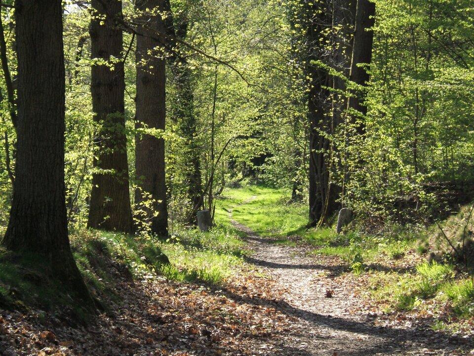 Na zdjęciu droga gruntowa wlesie liściastym.