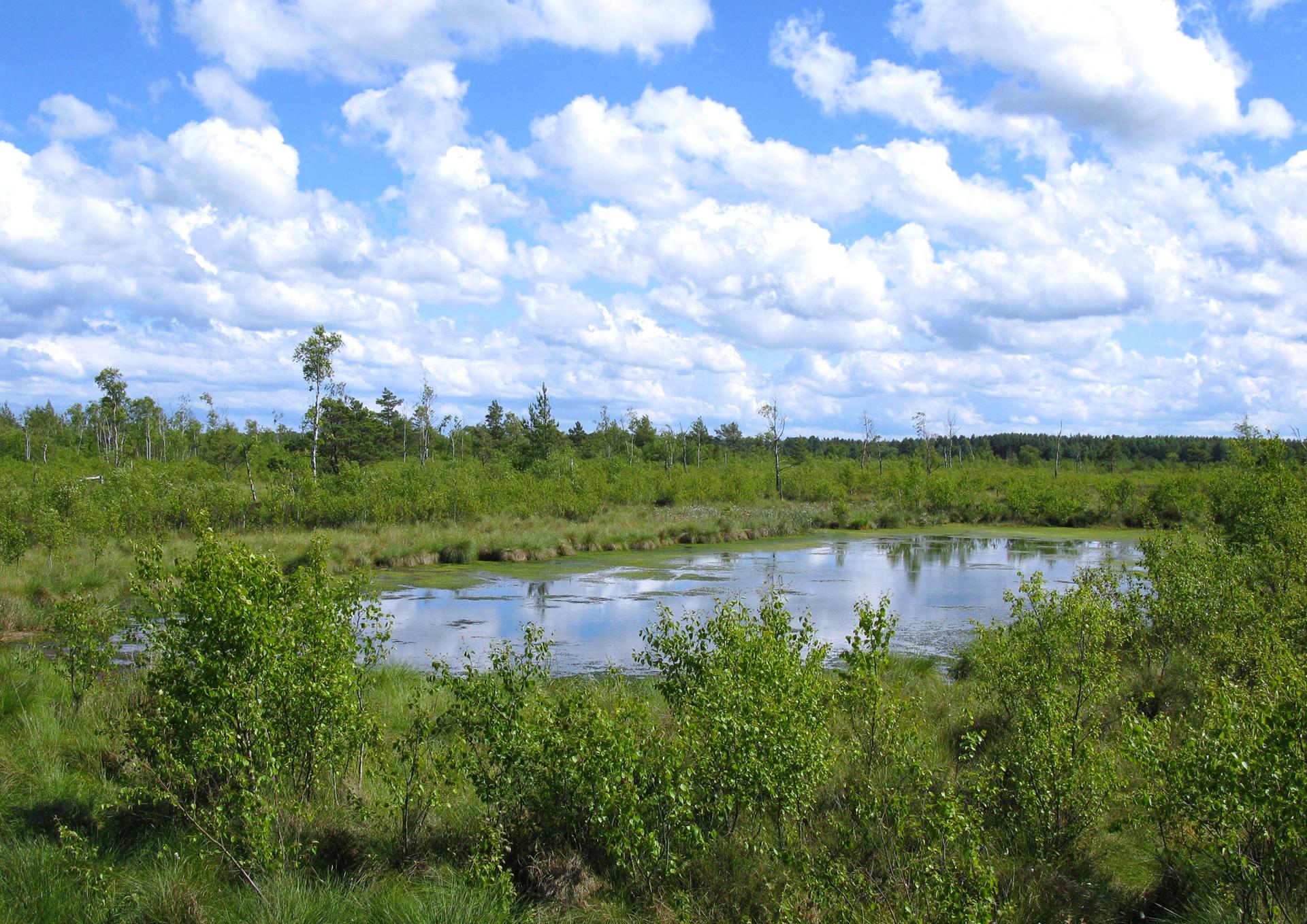 Fotografia prezentuje niewielkie jezioro otoczone ze wszystkich stron roślinnością. Przy brzegu są to kępy trawy oraz drobne pływające rośliny wodne. Następnie są widoczne krzewy oraz młodnik zniewielkim drzewami.