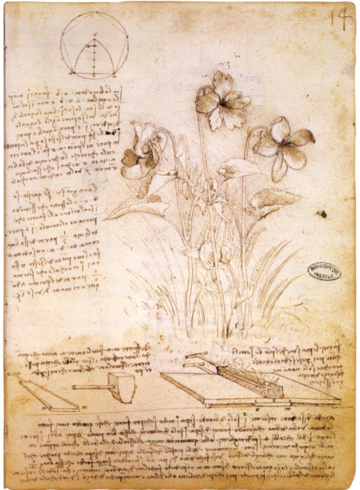 Notatki zbotaniki RękopisLeonarda da Vinci znotatkami zbotaniki. Obecnie przechowywany wBibliotece wParyżu. Zwróć uwagę na notatki sporządzone słynnym pismem lustrzanym – litery miały normalny wygląd dopiero gdy oglądało się je odbite wlustrze. Źródło: Leonardo da Vinci, Notatki zbotaniki, ok. 1490, Biblioteka wParyżu, domena publiczna.