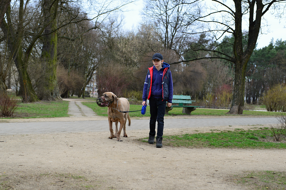 Fotografia przedstawia chłopca wwieku około dziesięciu lat, spacerującego zpsem po parku.