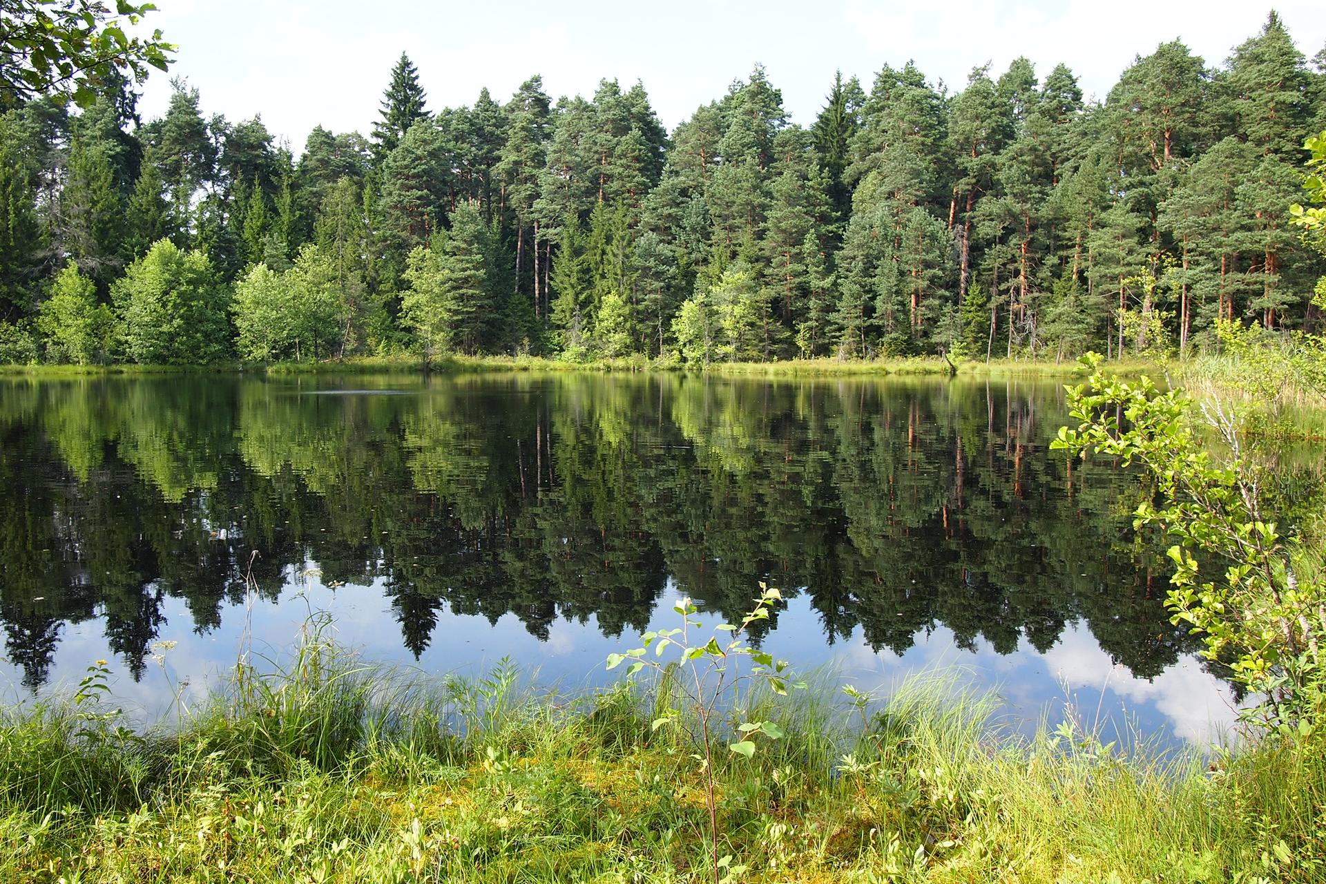 Fotografia przestawia jezioro wlesie. Wwodzie odbija się błękitne niebo izielone drzewa. Zprzodu fragment brzegu porośnięty trawą. Jezioro to ekosystem naturalny. małą liczbą gatunków. Slajd 4 to Akwarium jako ekosystem sztuczny.