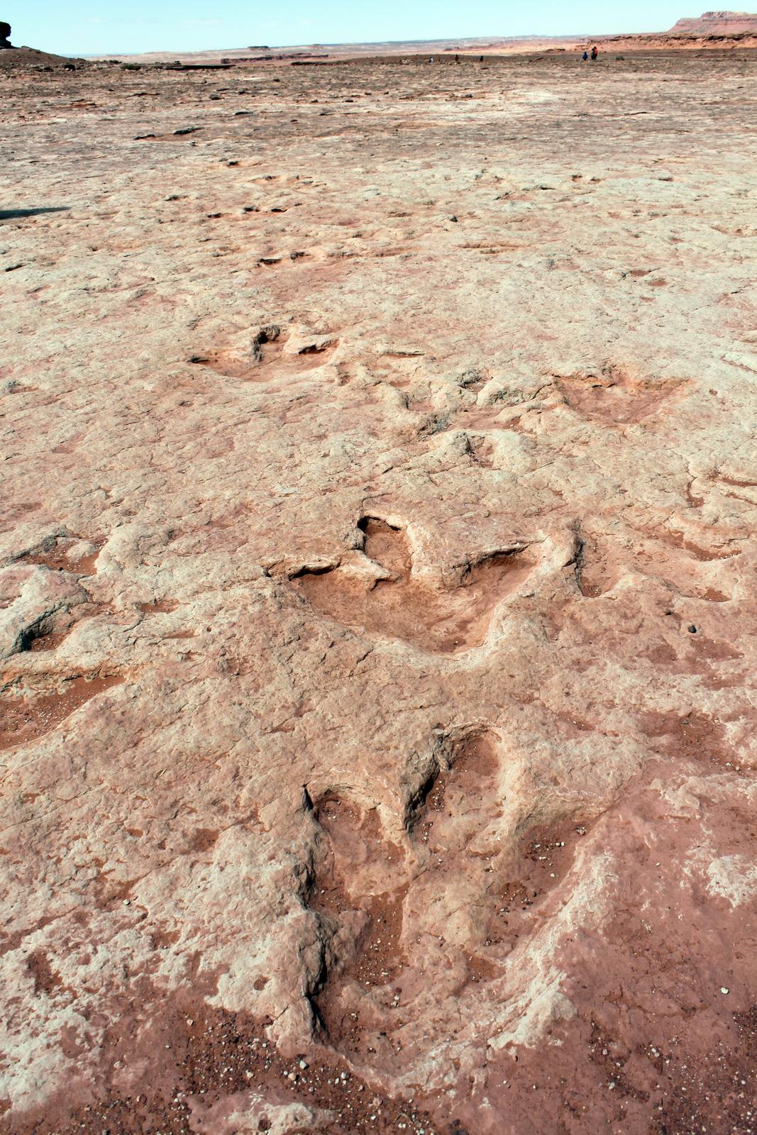 Fotografia prezdstawia powierzchnię skały wkrajobrazie, wktórej widnieje wiele odcisków trójpalczastych stóp wymarłych gadów.