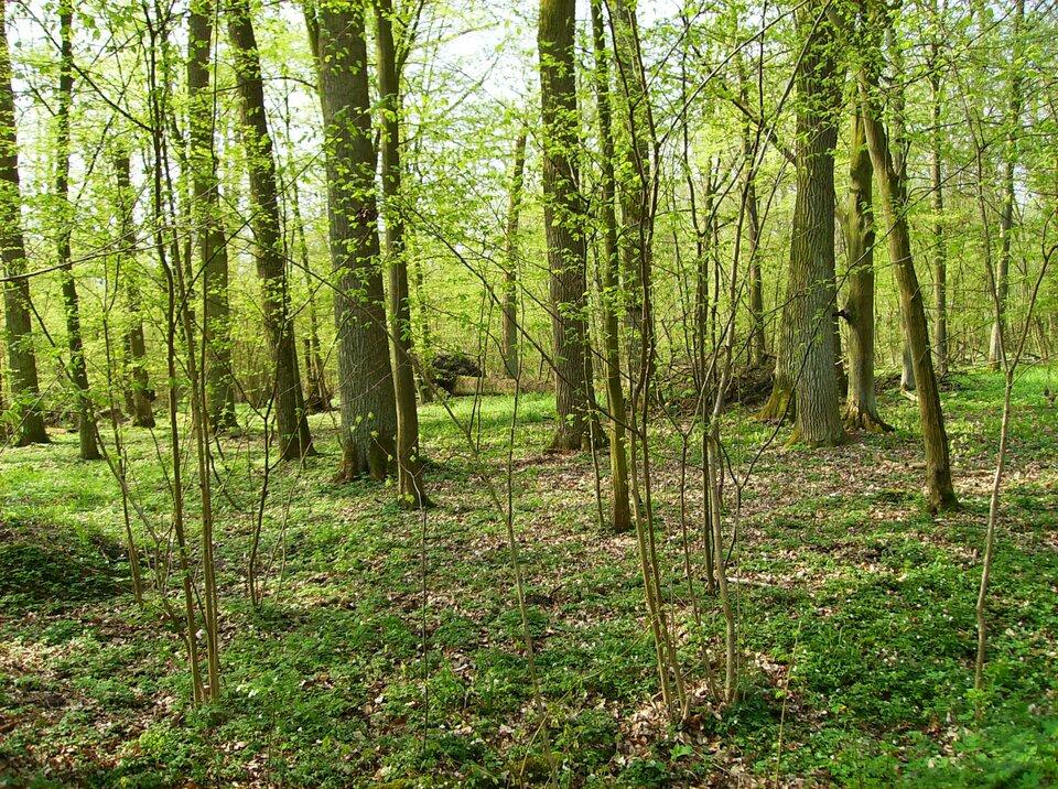 Na zdjęciu las liściasty.
