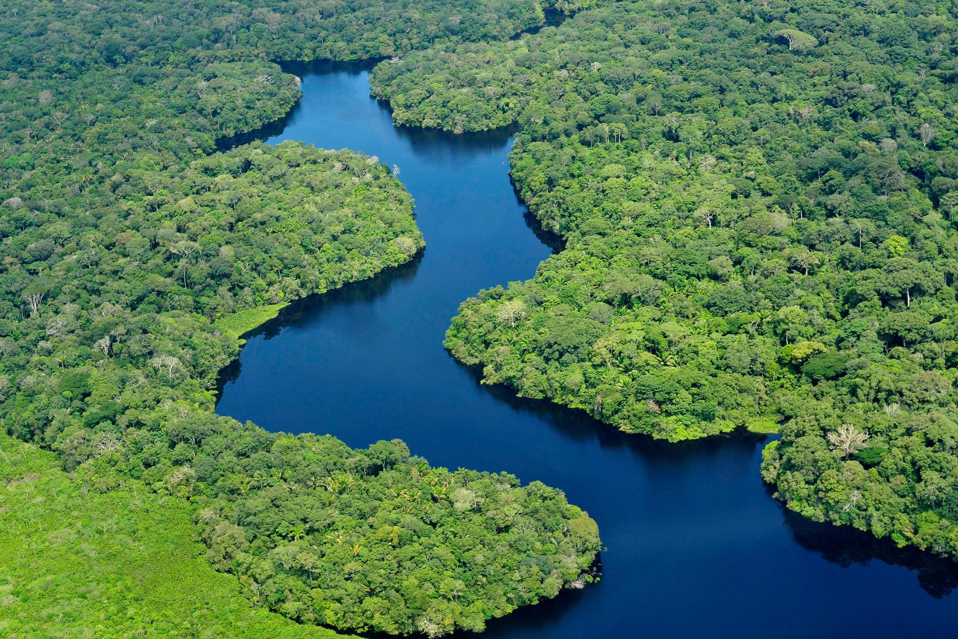 Fotografia lotnicza przestawia zielony las równikowy. Drzewa rosną gęsto, mają zwarte korony. Miedzy drzewami błękitna rzeka. Naturalny ekosystem wiecznie zielonego lasu równikowego tworzy niezliczona ilość gatunków. ekosystem sztuczny.