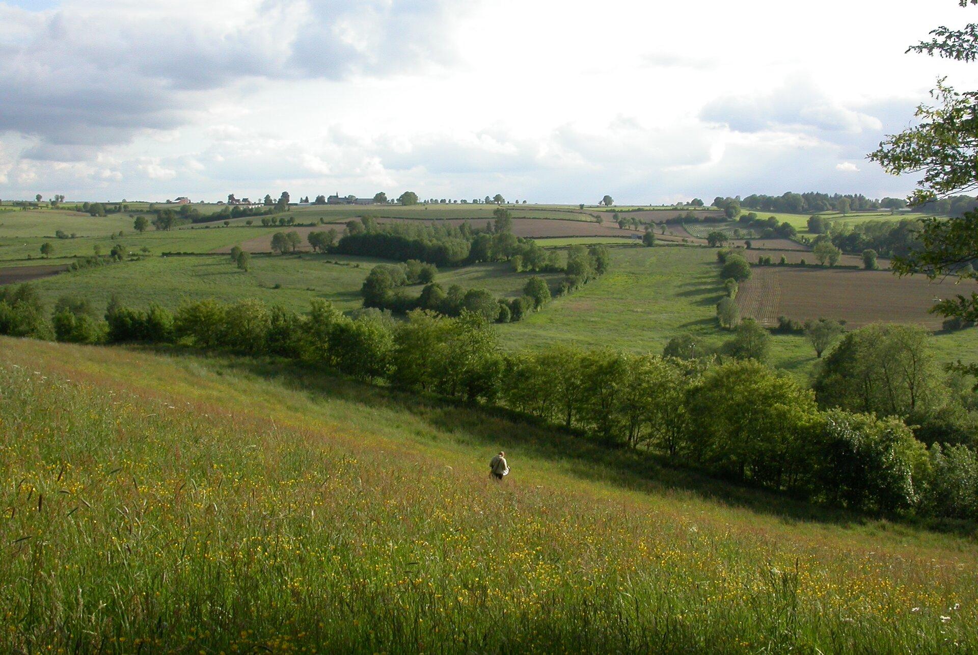 Fotografia przedstawia krajobraz pól uprawnych. Zlewej jest polna droga, wgłębi dwa krzaki idrzewo. Na niektórych polach rośnie zielona kukurydza. Wcentrum stoi czerwony ciągnik zpługiem. Pole zprawej udołu jest już zaorane. Chodzą po nim trzy biało-czarne bociany.