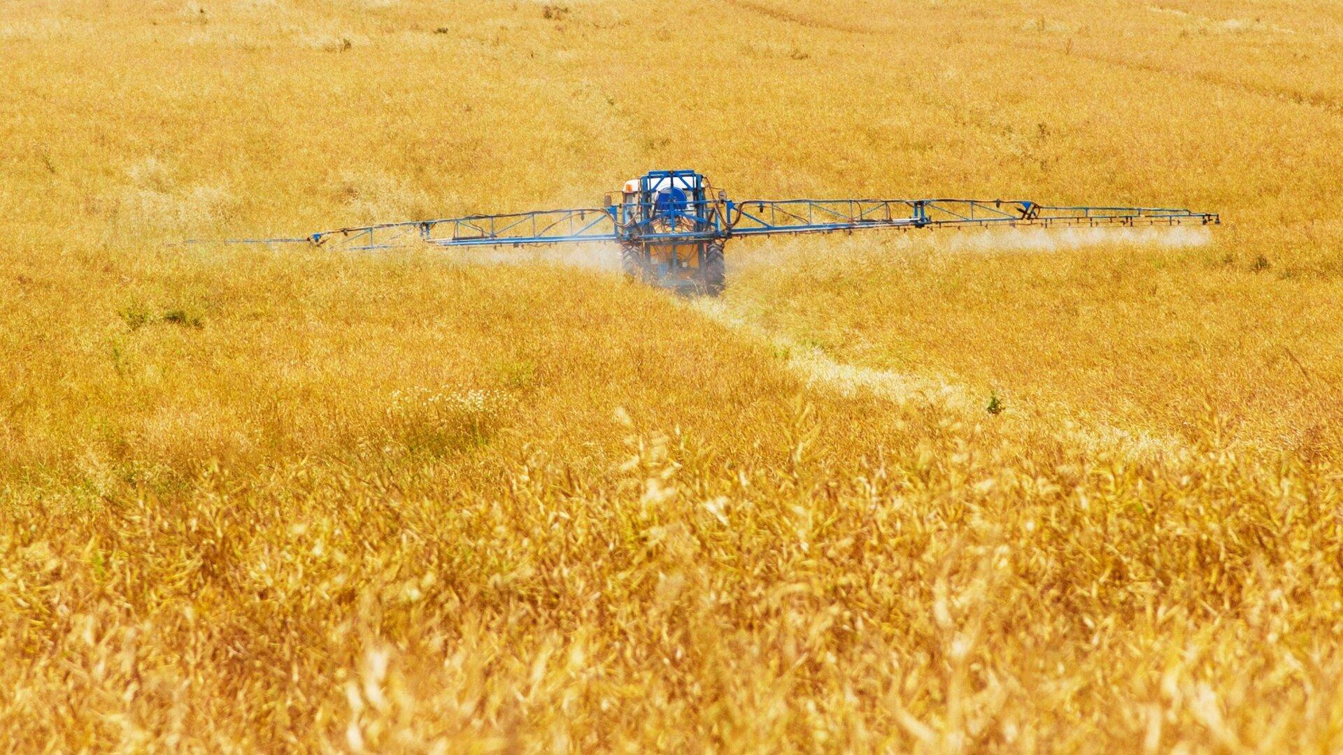 Zdjęcie przedstawia pole zboża. Cały kadr wypełniony złocistymi kłosami, nie widać nieba. Wcentralnej części pola traktor zszerokim ramieniem do opryskiwania zamontowanym wtylnej części opryskuje zboże.